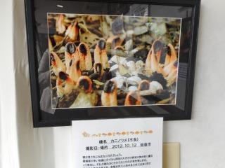 きのこ写真展4