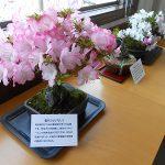 6月は、坂本文雄「花と写真の展示会」