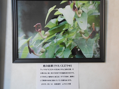 坂本さん展示3