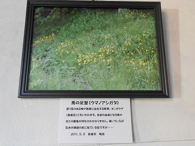 坂本さん展示2