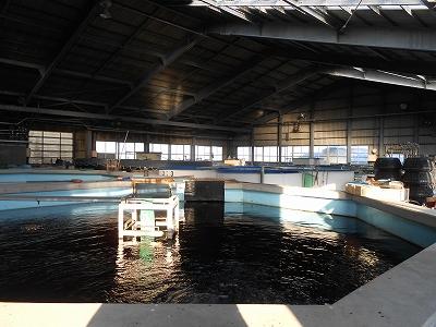 水産センター4