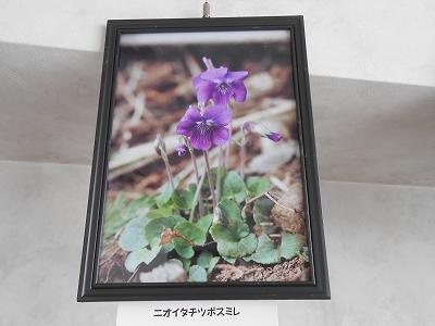 春の写真2