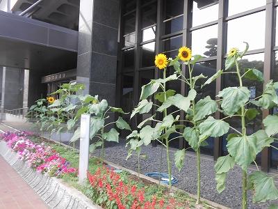 議会棟花壇2