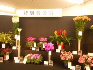 房総の花々3