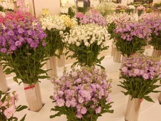 房総の花々2