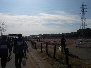 印旛沼浄化運動2