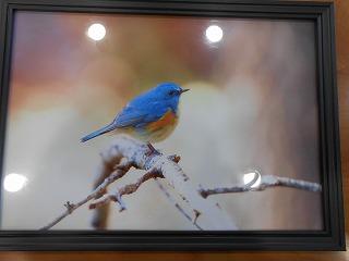 青い鳥写真