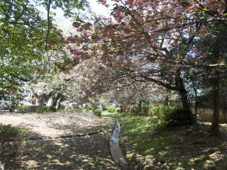 加賀清水公園1