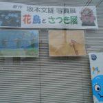 坂本文雄「さつき展」&肝炎サポート大集会