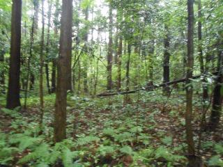 おおたかの森3