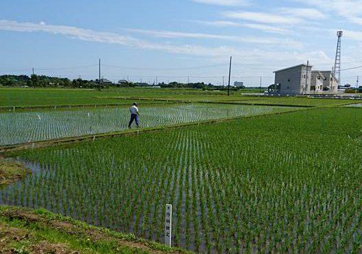 千葉県農林総合センター成東生育地を見学