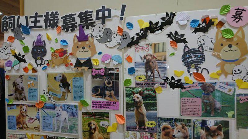 京都動物愛護センター