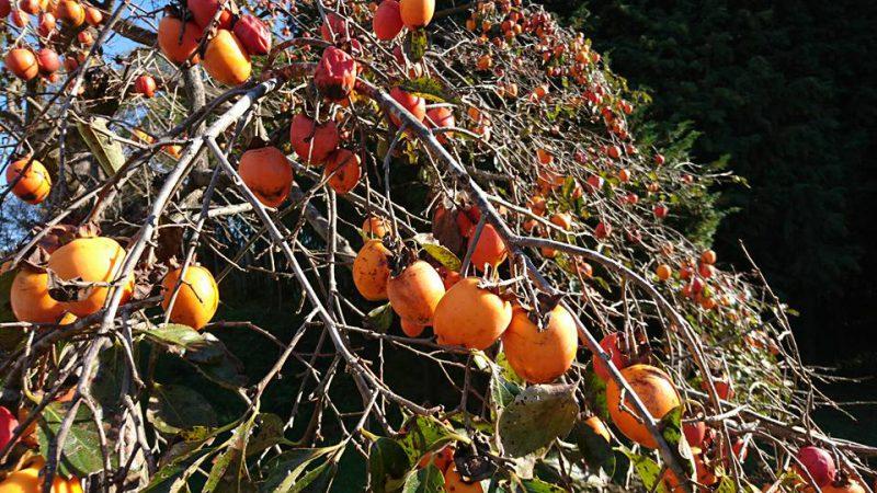 里山の秋の風景