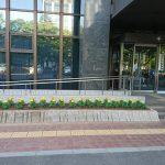 6月県議会開会・ツバメの巣
