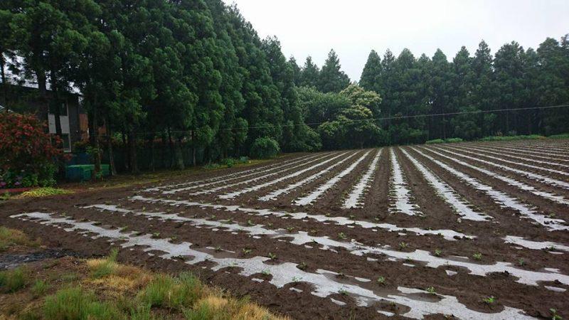 先日訪問した直弥の農家さんの畑