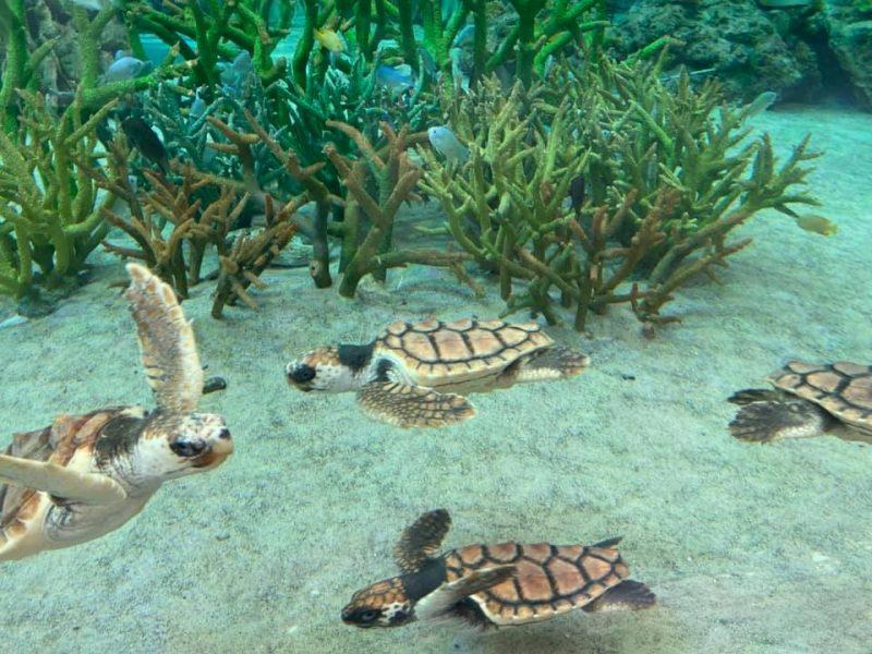 鴨川シーワールドのウミガメたち