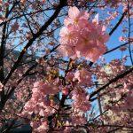 2月20日(木) 本日10時〜会派「千葉民主の会」代表質問