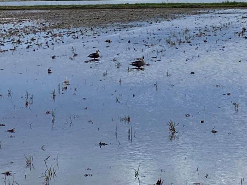 夕暮れ時の印旛沼周辺