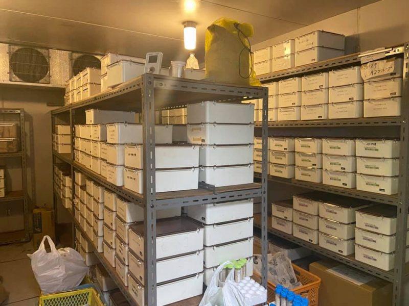 落花生研究室の種子保存庫と落花生畑