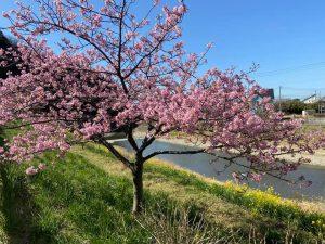 南房総の春