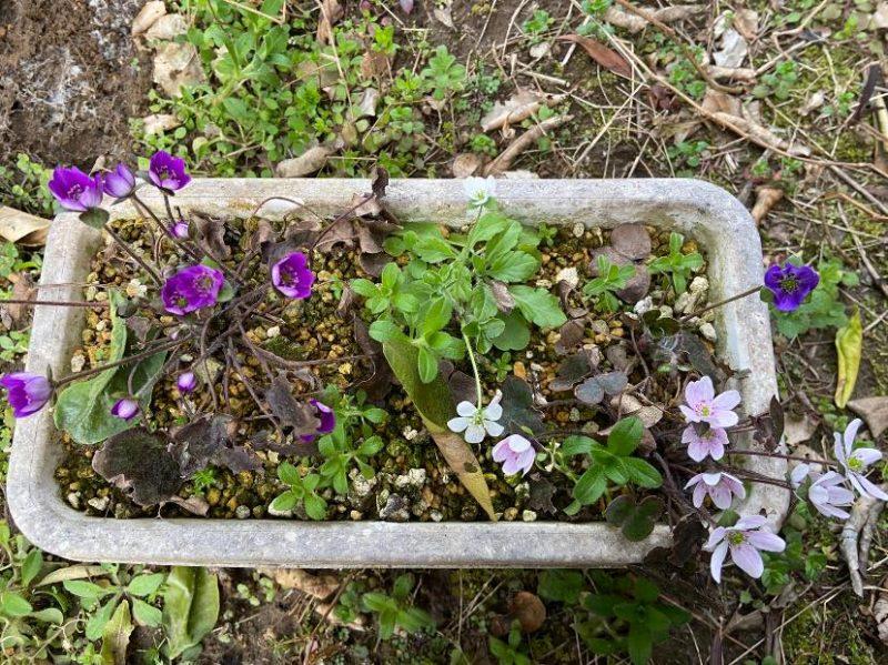 庭の草花を手入れ