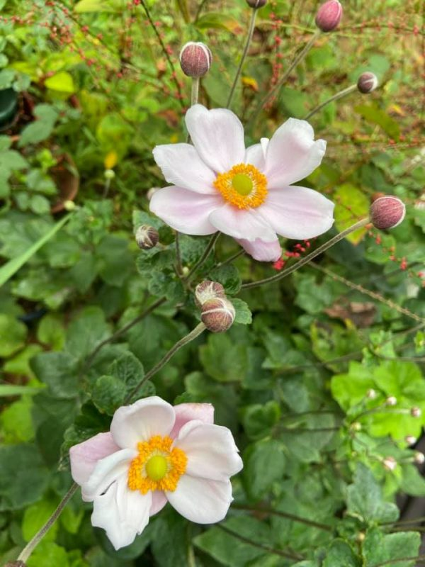 庭の秋の草花